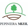 Pepiniera Mizil