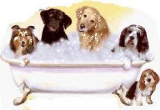 Servicii frizerie canina de la S.c. Daisy- Vet S.r.l.