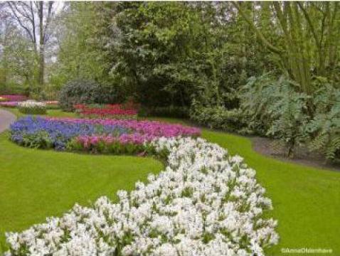 Pamant fertil pentru flori de la As Construct Srl