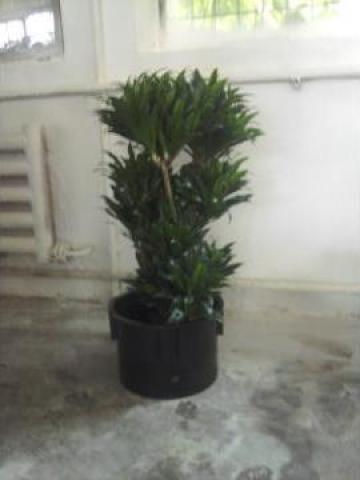 Plante de interior si pentru terase bucuresti jardins for Plante de interior