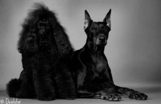 Frizerie canina si felina la domiciliu de la Cosmetica-canina-felina.ro