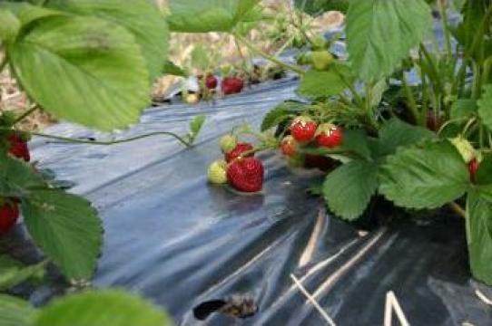 Folie de mulcire de la Imd Horticulture Systems Srl