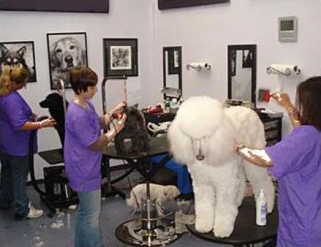 Cursuri de coafor canin Bucuresti de la Grooming School