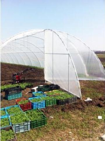 Solarii pentru legume - ventilatii pe capete si lateral de la Wert Mond Srl