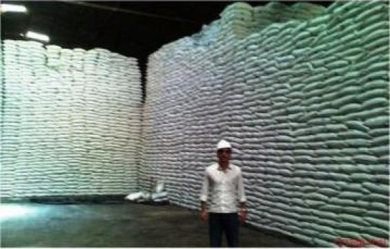 Zahar trestie Sugar cane Icumsa 45