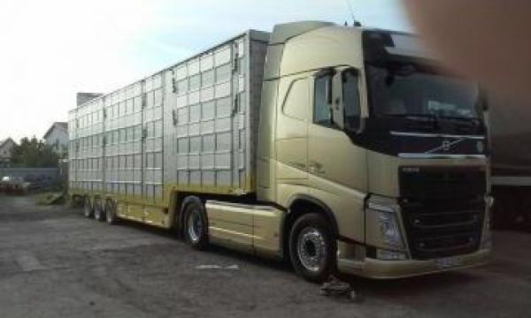 Transport animale vii de la Dobrota Trans