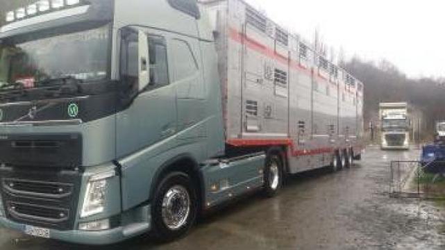 Transport de animale vii intern si international de la Dobrota Trans